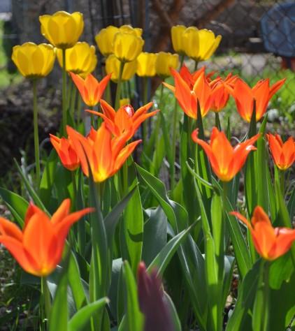 cropped-flowers-471.jpg