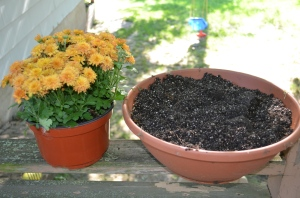 Pretty easy - just needed a planter to fit the Mums