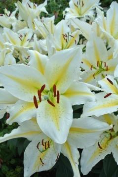 Lilies in the Sunken Garden