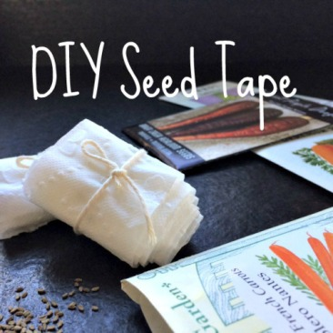 diy-seed-tape 2.23.16