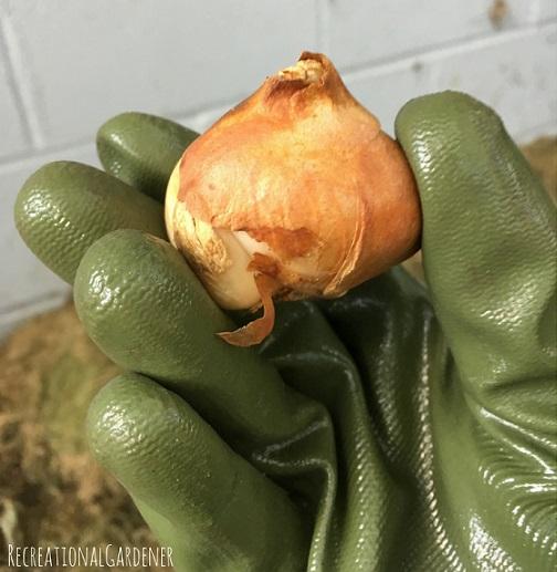 honey-badger-gloves